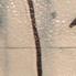 Simon Graffiti