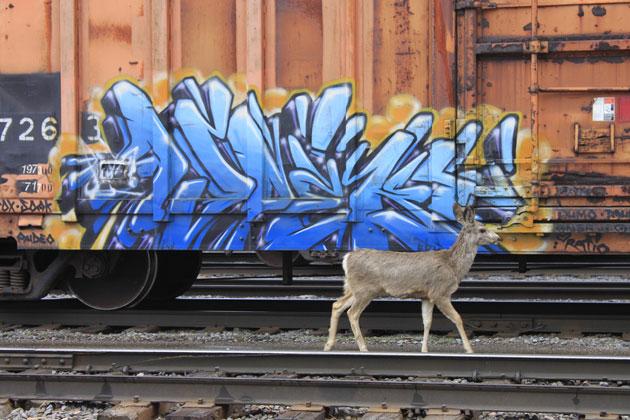 aspekt graffiti freight