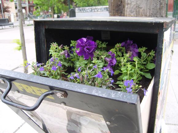posterchild flyer planter boxes