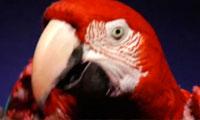 Blip Boutique – Rapping Parrot