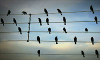 Music Composed By Birds