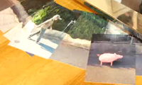 Stop Motion with Wolf and Pig